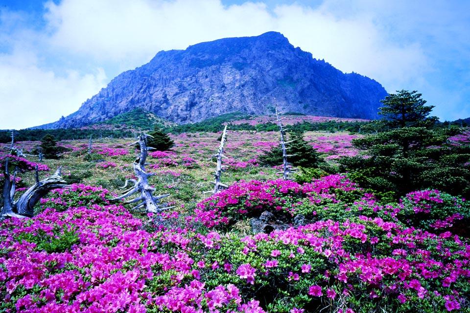 Неприступный остров Чеджудо