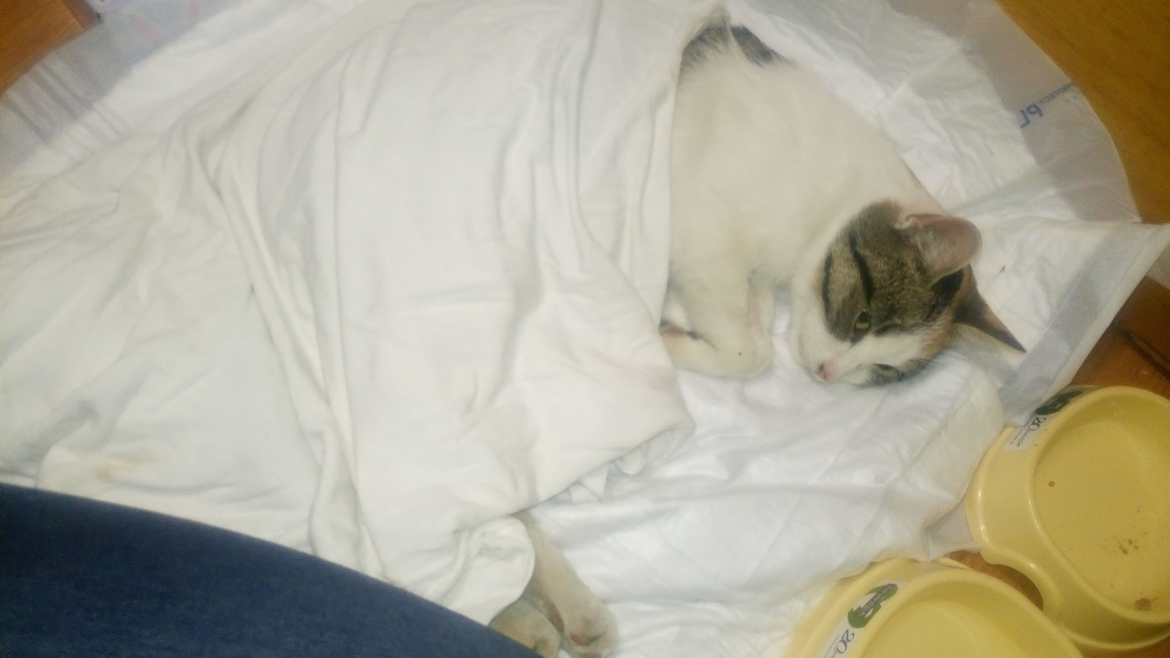 «У неё не было сил кричать, она просто смотрела в глаза…» Эта девушка спасла безнадёжную кошку