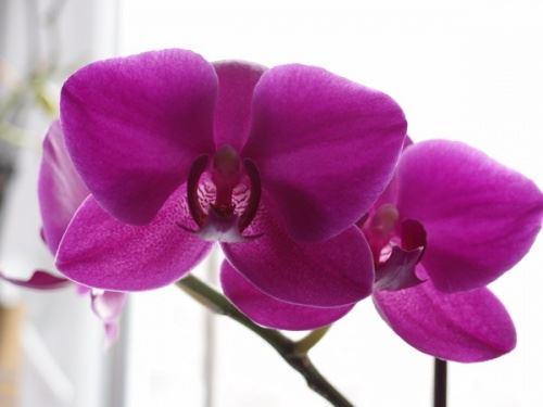 Цветы что дети уход любят, комнатные растения