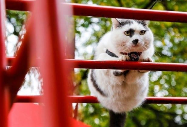 За кота Лёву из Калининграда…