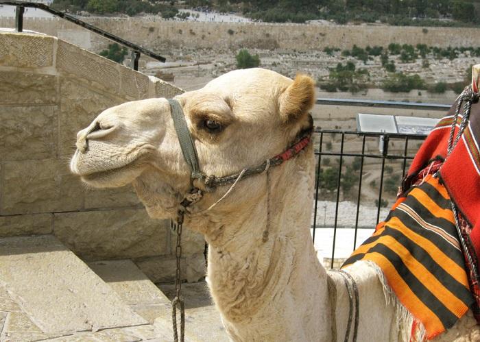 что посмотреть в Израиле за 10 дней