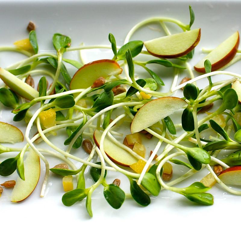 Биогенная еда — самый дешевый способ борьбы со старением.