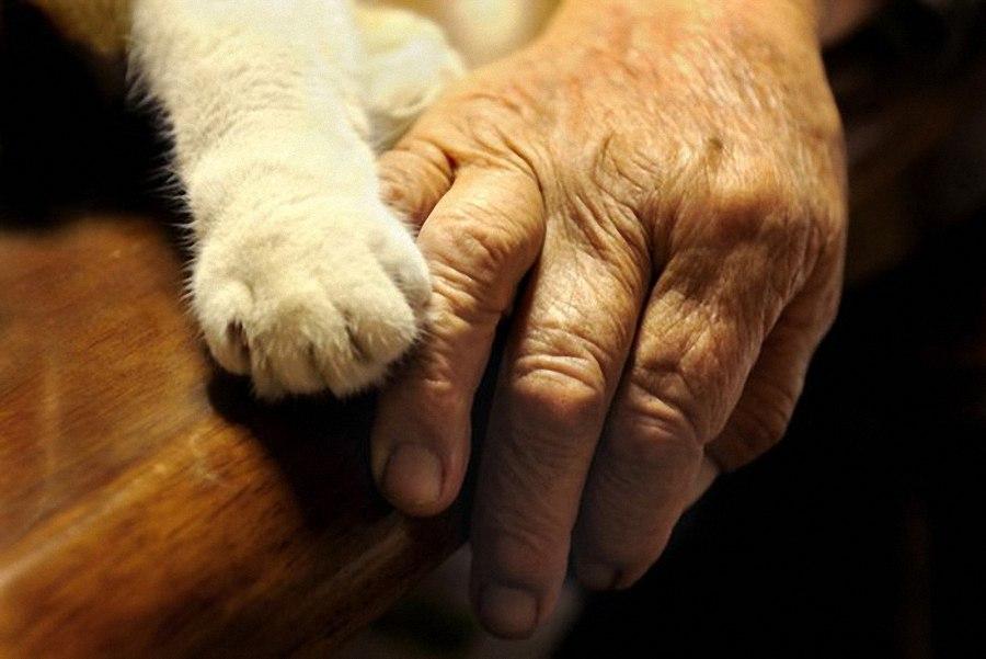 Картинки по запросу картинки Бабушка и кошки