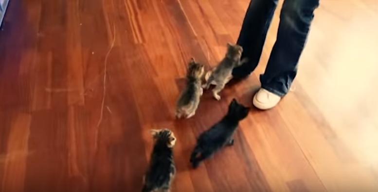 Хозяйка этих котят вернулась…