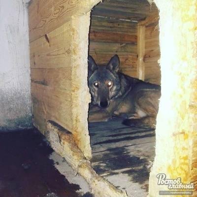 Что с ним делать: жители Ростова поймали волка