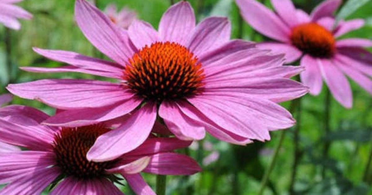 Февраль: посевы цветов и зак…