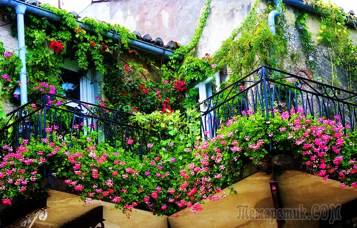 САД, ЦВЕТНИК И ОГОРОД. Идеи озеленения балкона – удиви гостей и соседей