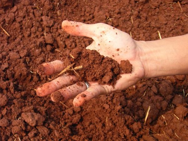 Определить механический состав почвы легко