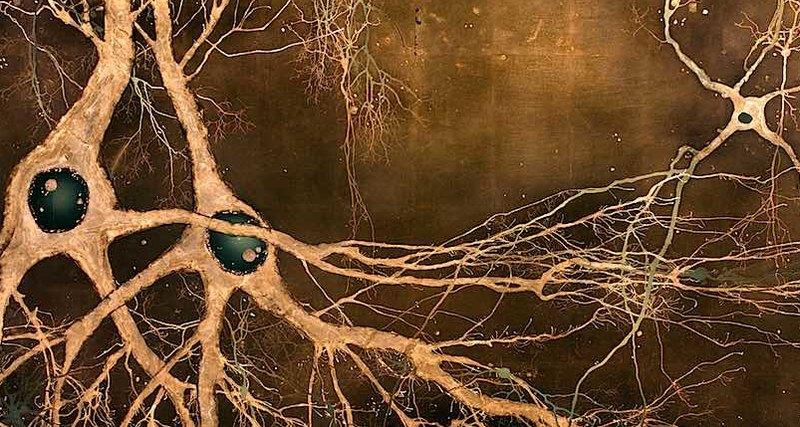 Нервные клетки мозга восстан…