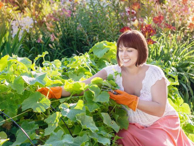 20 полезных советов огородникам и садоводам