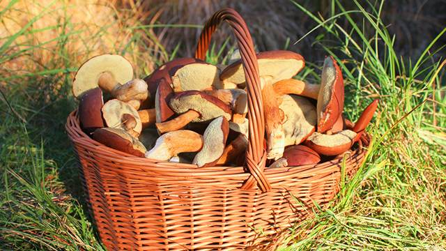 Россиянам могут разрешить продавать грибы, ягоды и бересту... в пункты скупки