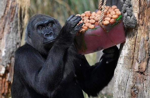 В Лондонском зоопарке нашли приятный способ спасти животных от жары