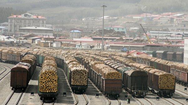 Китайский вопрос: глава Минприроды пригрозил остановкой экспорта леса в Китай