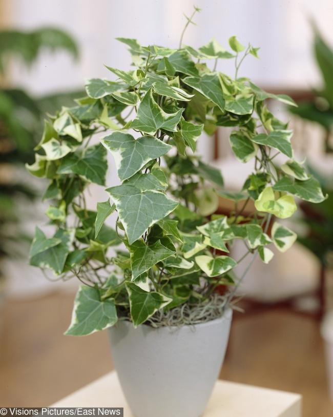 15 ядовитых растений, которые скорее всего есть у вас дома