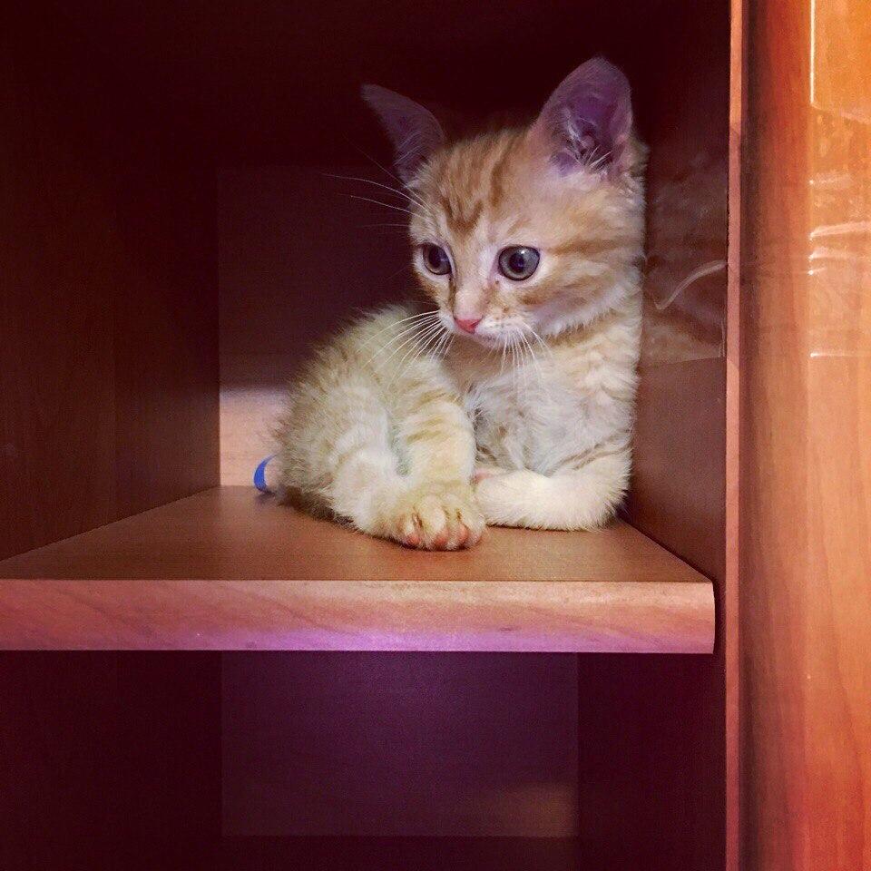 В этом мире стало одним счастливым котёнком больше