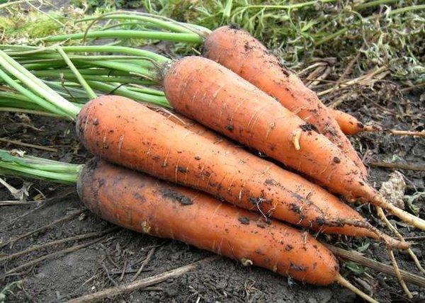 Мой главный секрет хранения моркови до следующего лета