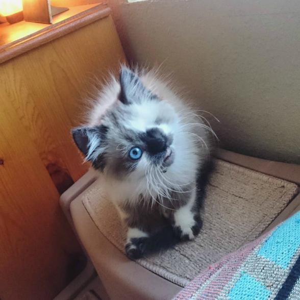 Когда-то этот красивый кот б…