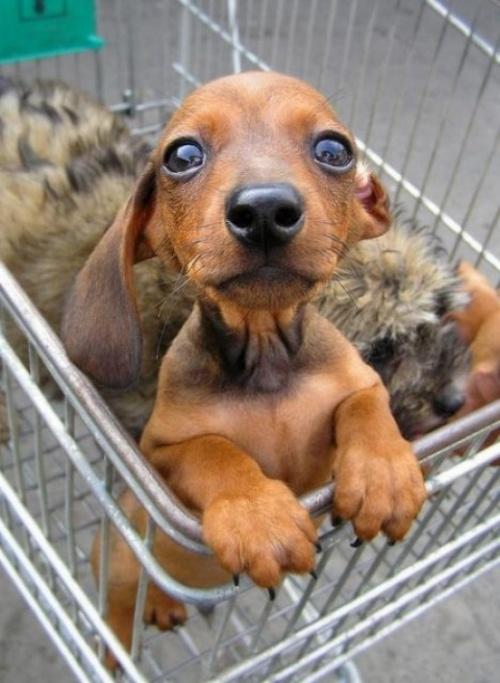Позитивная подборка с животными :)