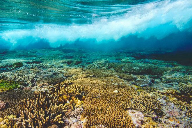 Большой барьерный риф реставрирует себя сам