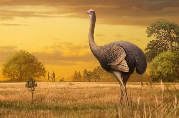 В Крыму найдены останки древней гигантской птицы