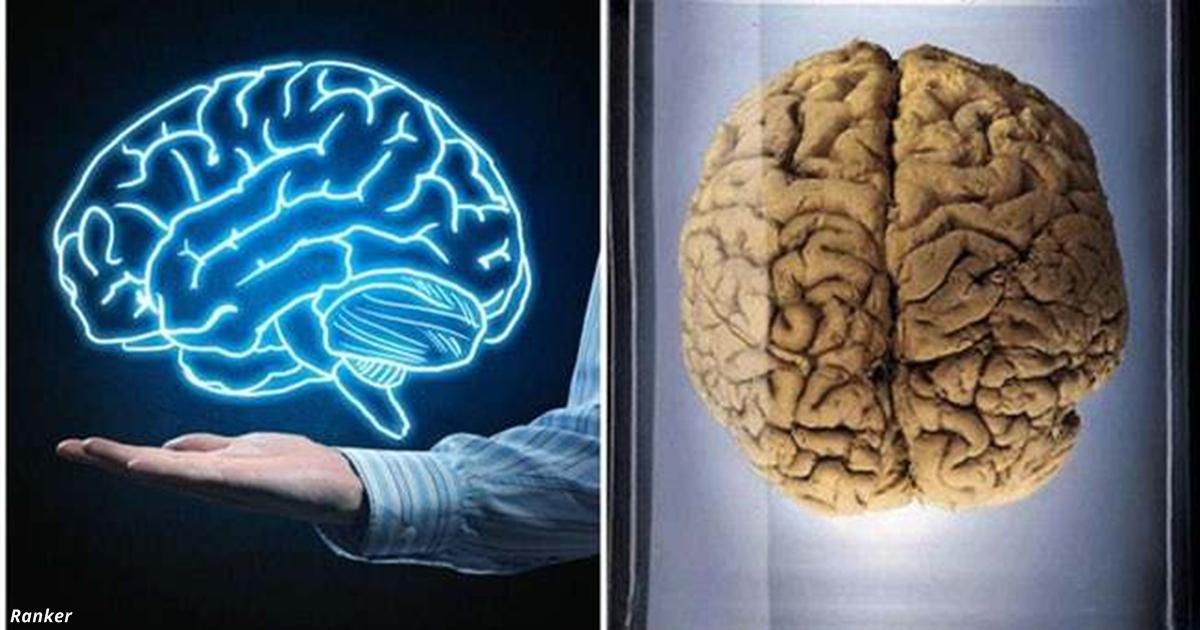 12 жутких, но захватывающих фактов о мозге, которых вы точно никогда не слышали