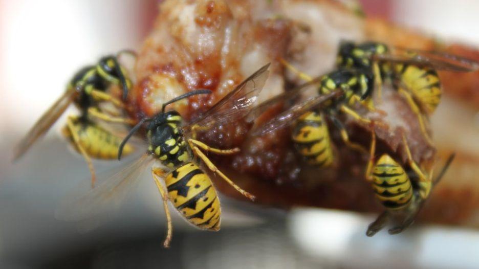 Осы против пчел