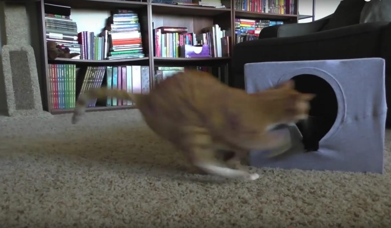 Кошачий домик за 5 минут. Коты прыгают туда без промедления