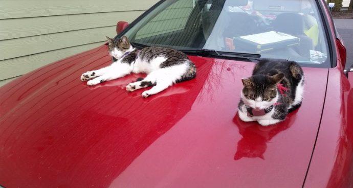 5 лет мужчина возил кошек на…