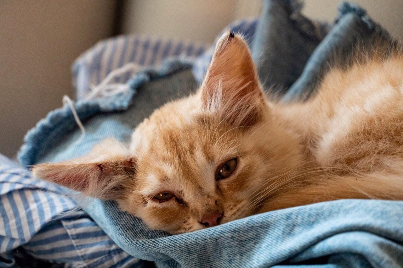 Побитый котенок плакал на улице. Девушка пожалела его и приютила, но он оказался тем еще шкодой…
