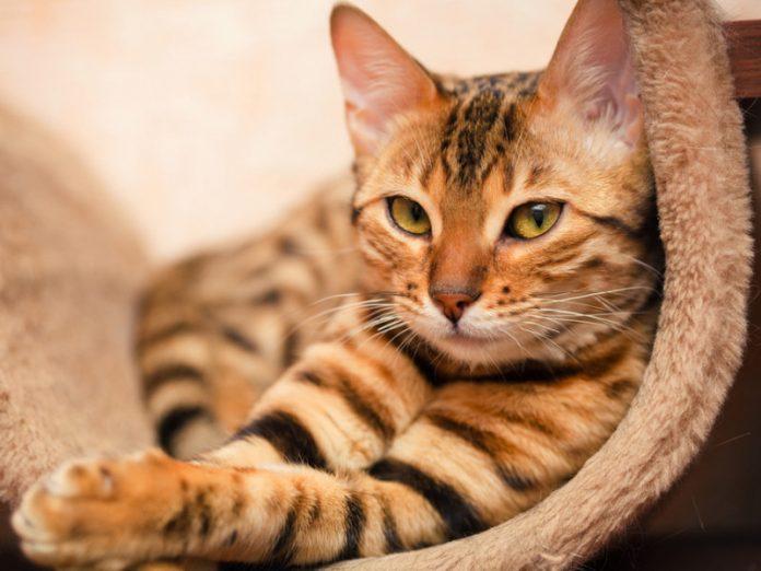 Я думала, что все коты зовут своих хозяев, когда что-то случается. Но, мой кот…