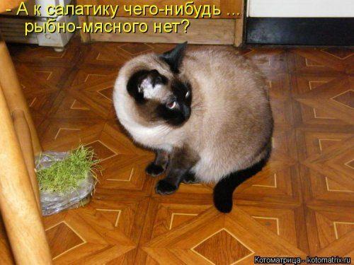 Самые смешные котоматрицы