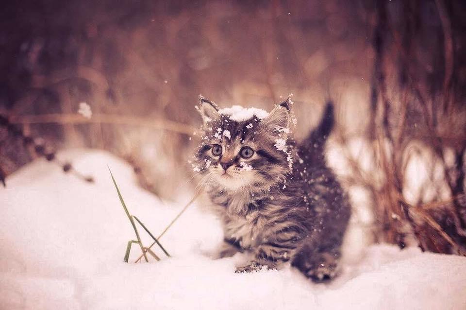 По заснеженной улице бежал маленький пушистый котёнок. Он боялся опоздать и мчался со всех лап!