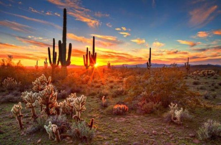 10 удивительных фактов о растениях