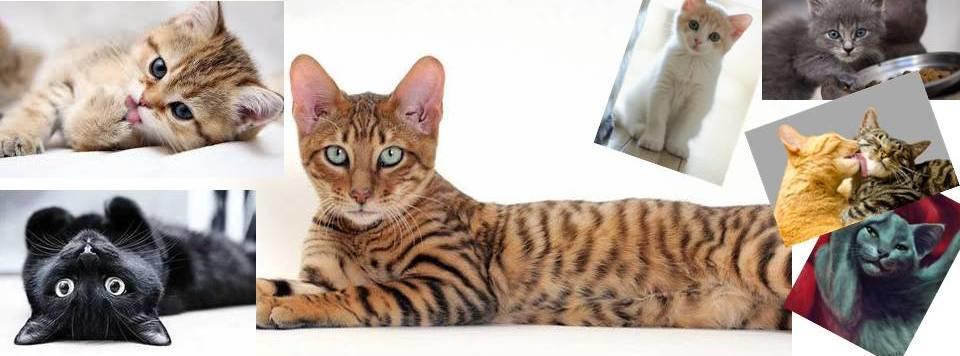 Кошек не любить нельзя, котов, кстати, тоже...