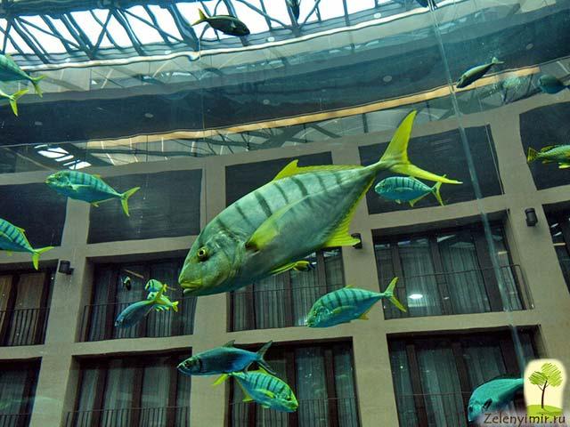 """Самый огромный аквариум в мире - """"Аквадом"""" в Берлине, Германия - 8"""