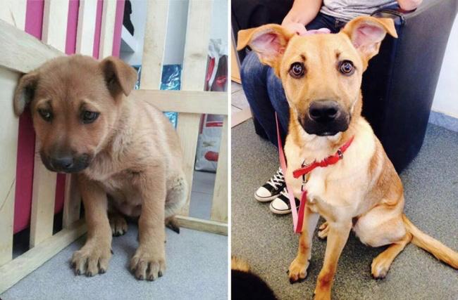 Чудесное превращение: животные до и после усыновления.