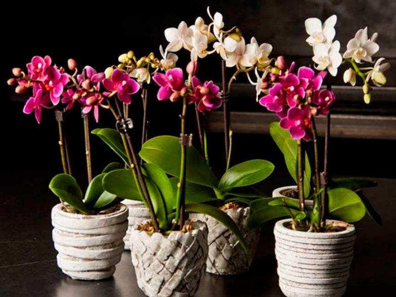 Ваш цветок-оберег по дате рождения
