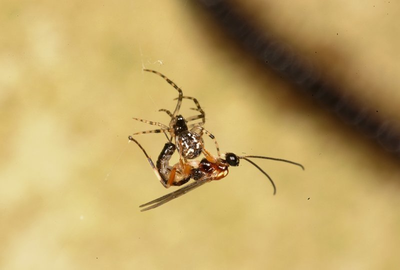 Зомби-рабы в мире насекомых, как раб становится едой, нянькой и телохранителем хозяина-паразита