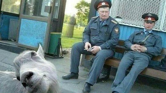 Полиция умеет шутить
