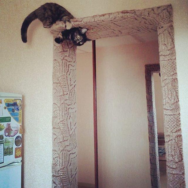 Дверь для котов