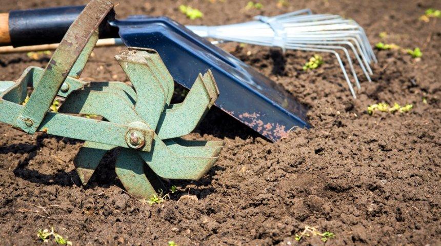 : Почва в огороде