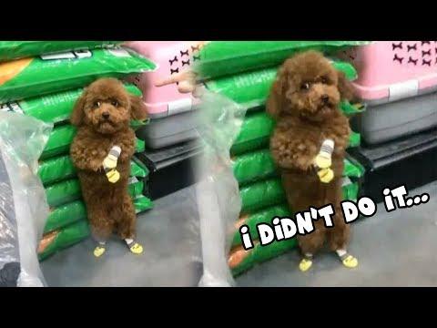 Очень виноватая собачка