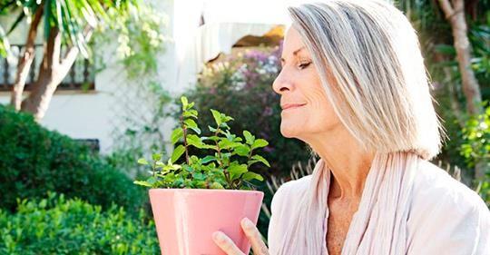 4 травы активизируют кровообращение головного мозга.