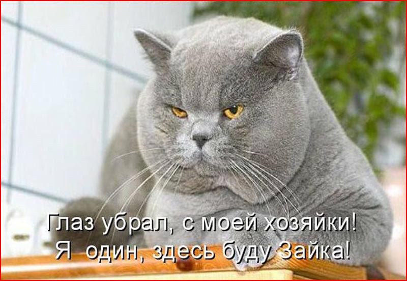 Про изнеженного кота и защит…