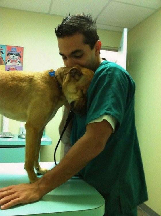 Нет ничего прекраснее благодарности животных братья наши меньшие, ветеринар, врач, доктор, животные, питомцы, работа, фото