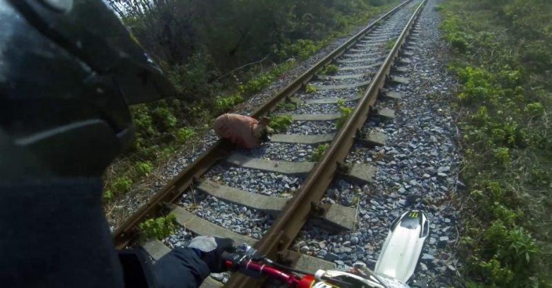 Мотоциклист спас связанную на рельсах собаку