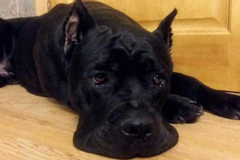 Неравнодушные петербуржцы отобрали собаку у хозяина-садиста