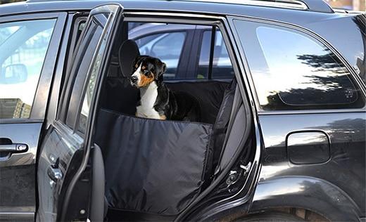 Поездка с собакой на машине: автогамак, аптечка, что еще надо взять?