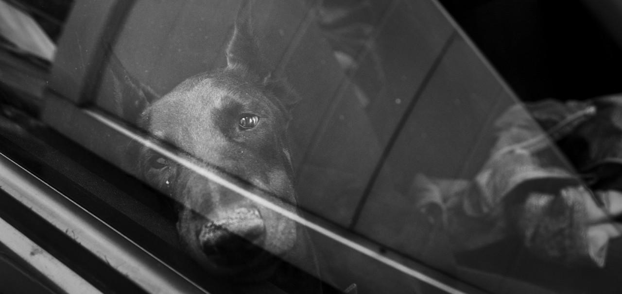 Таня и ее дети: История любви к собакам в проекте Раисы Михайловой
