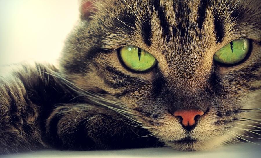 Обязанности по дому каждого кота ツ